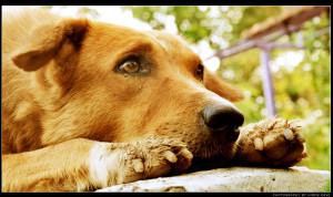 Street Dog Thinking